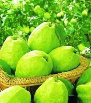 春季减肥食物鳄梨