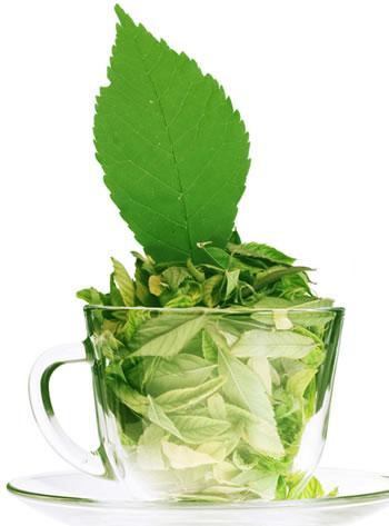 绿茶减肥法