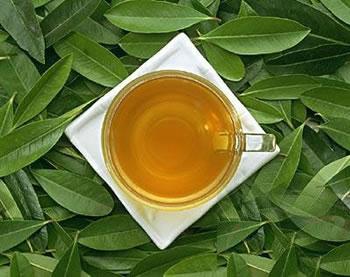 荷叶茶--爱吃油炸食品的肥胖